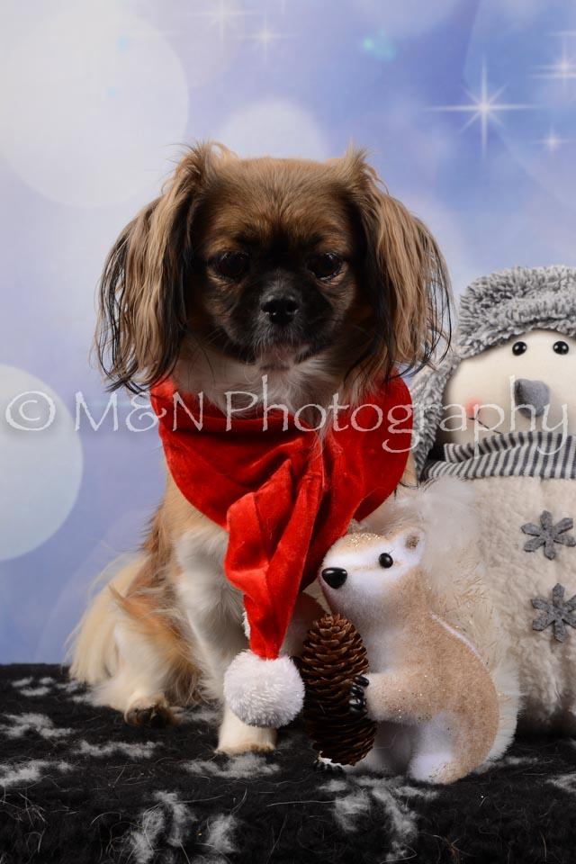 M&N Photography -DSC_6699