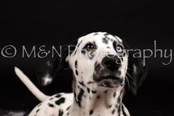 M&N Photography -DSC_9766