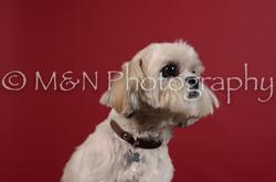 M&N Photography -DSC_3544
