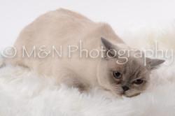 M&N Photography -DSC_8794