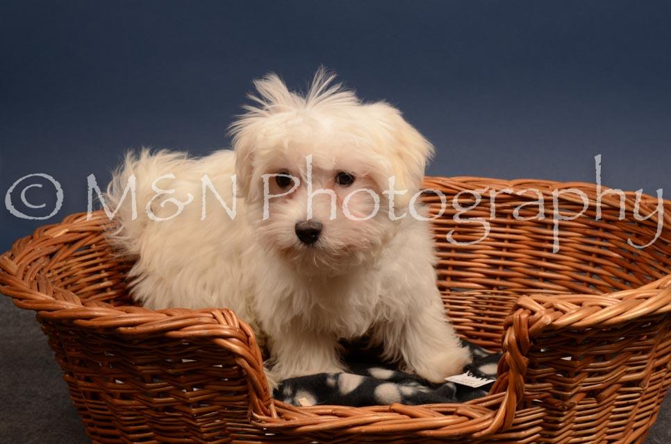 M&N Photography -DSC_4404