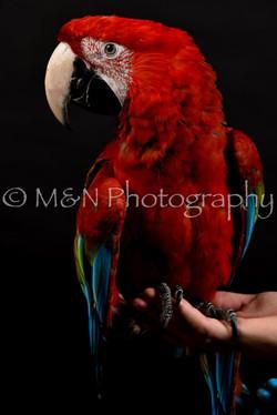 M&N Photography -DSC_2689