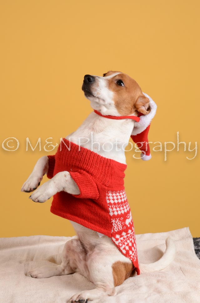 M&N Photography -DSC_4867