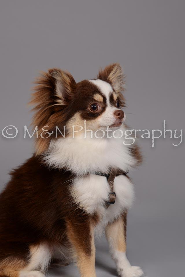 M&N Photography -DSC_2491