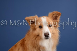 M&N Photography -DSC_4883