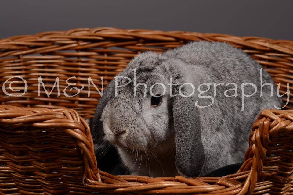 M&N Photography -DSC_2278