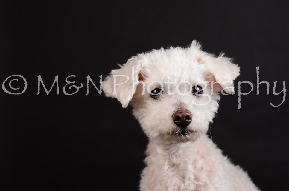 M&N Photography -DSC_5385
