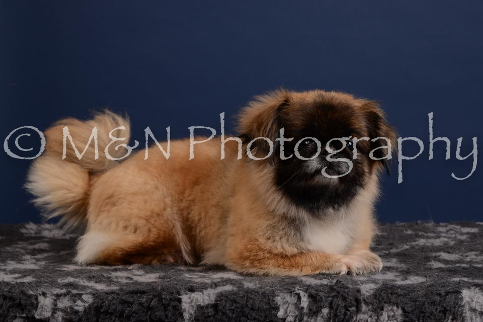 M&N Photography -DSC_4147