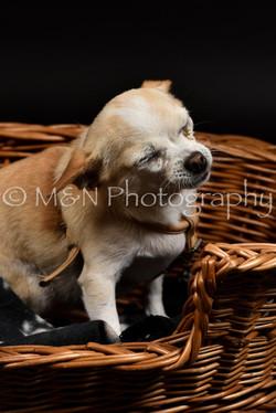 M&N Photography -DSC_2518