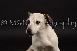 M&N Photography -DSC_0095