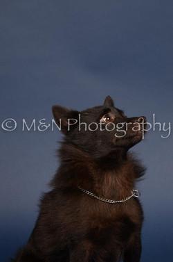 M&N Photography -DSC_3911