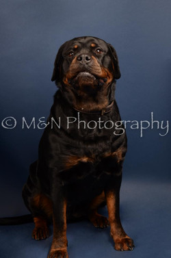 M&N Photography -DSC_4059
