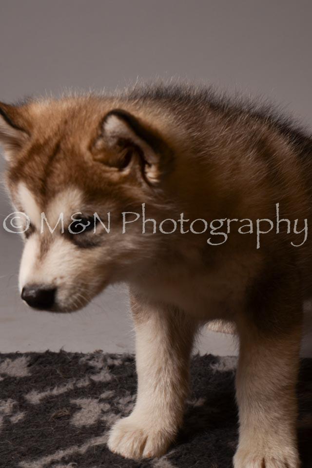 M&N Photography -DSC_2615