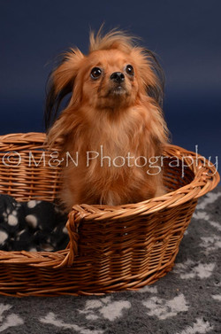 M&N Photography -DSC_0268