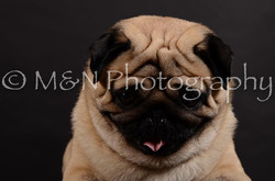 M&N Photography -DSC_5976