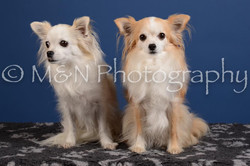 M&N Photography -DSC_5051