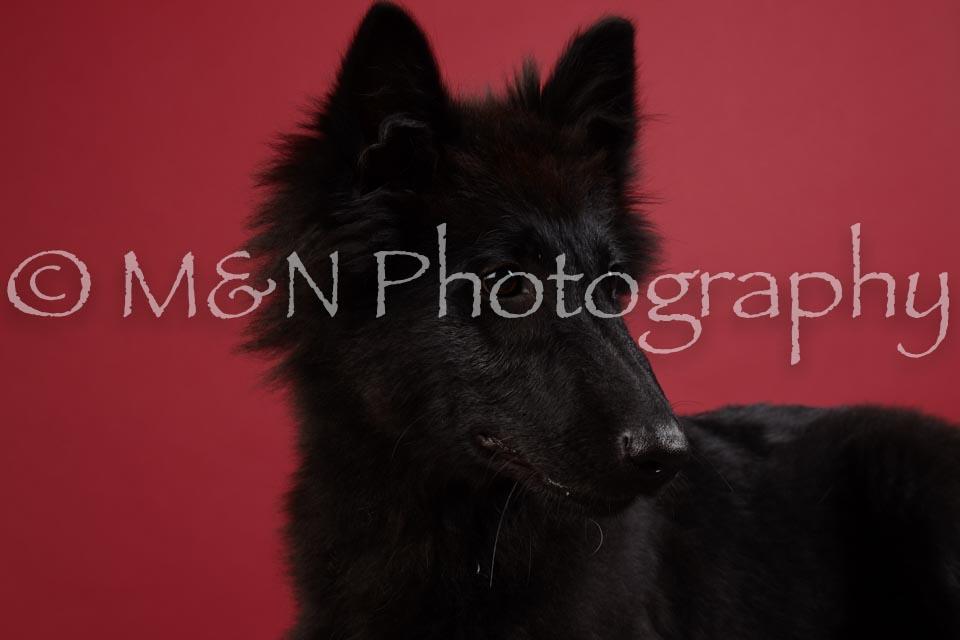 M&N Photography -DSC_3365