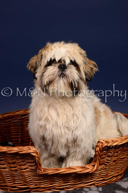 M&N Photography -IMG_4645