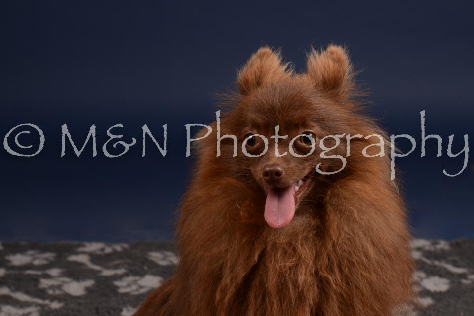 M&N Photography -DSC_0427