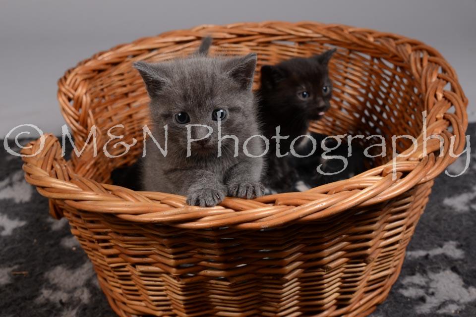 M&N Photography -DSC_2381
