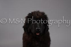 M&N Photography -DSC_1534