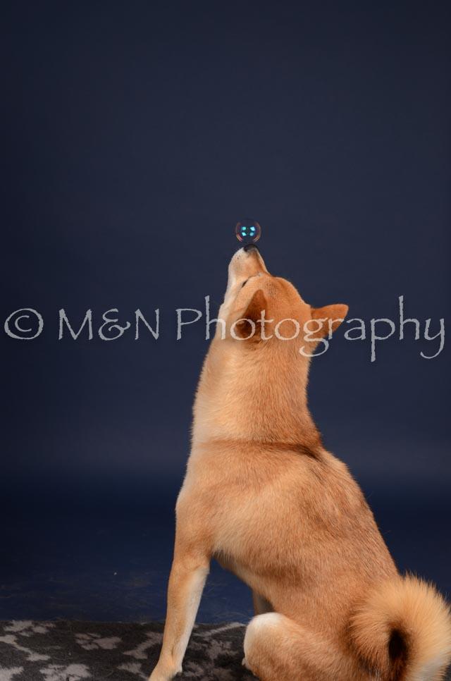 M&N Photography -DSC_0373