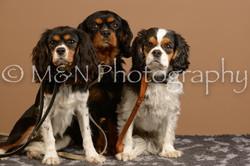 M&N Photography -_SNB0918