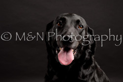 M&N Photography -DSC_0075