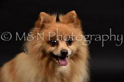 M&N Photography -DSC_2595