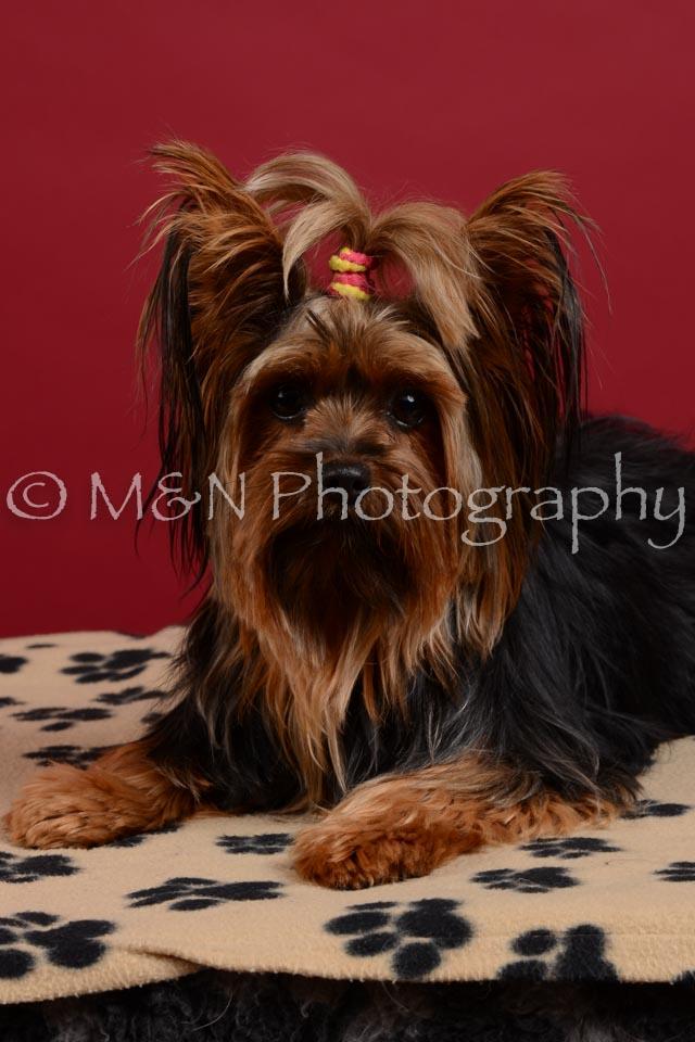 M&N Photography -DSC_3554