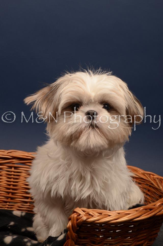 M&N Photography -DSC_4725