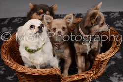 M&N Photography -DSC_2252