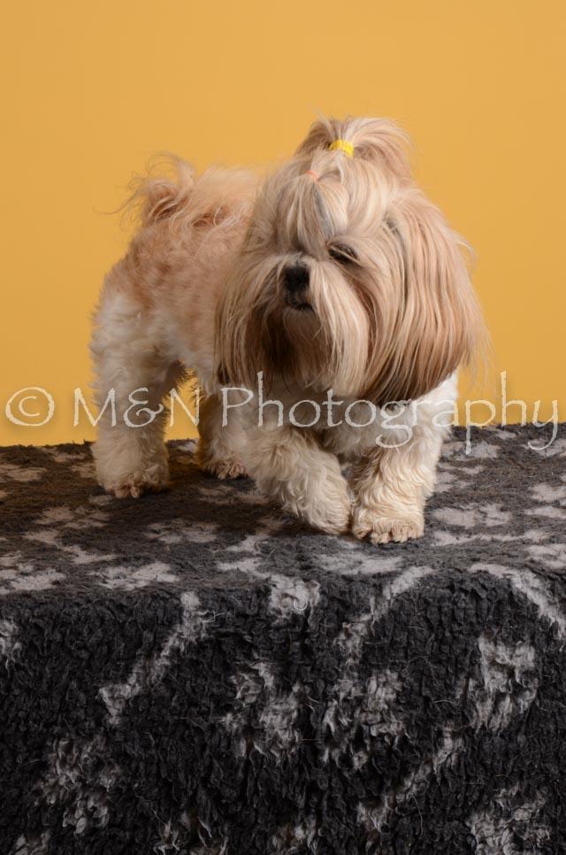 M&N Photography -DSC_4841