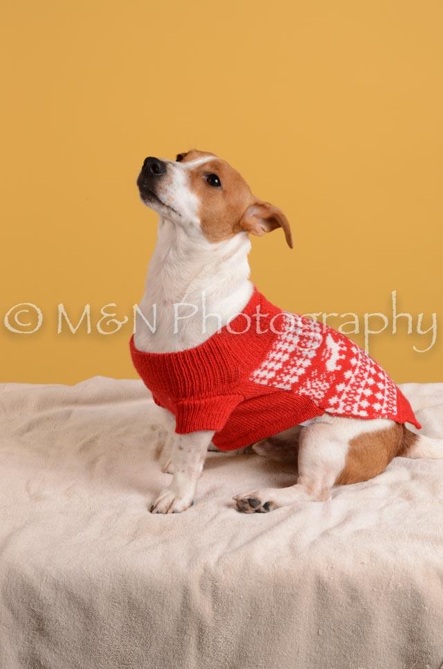 M&N Photography -DSC_4870