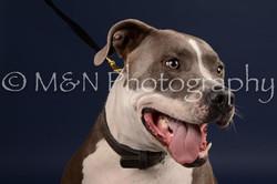M&N Photography -DSC_0554