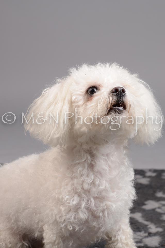 M&N Photography -DSC_2705