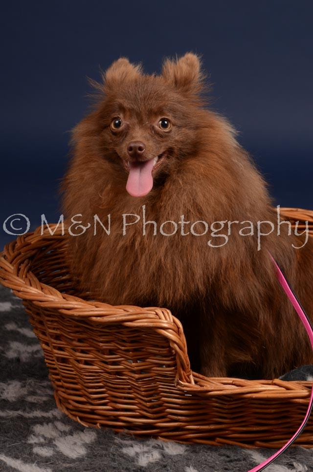 M&N Photography -DSC_0440