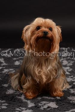 M&N Photography -DSC_9696