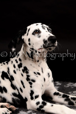 M&N Photography -DSC_9762