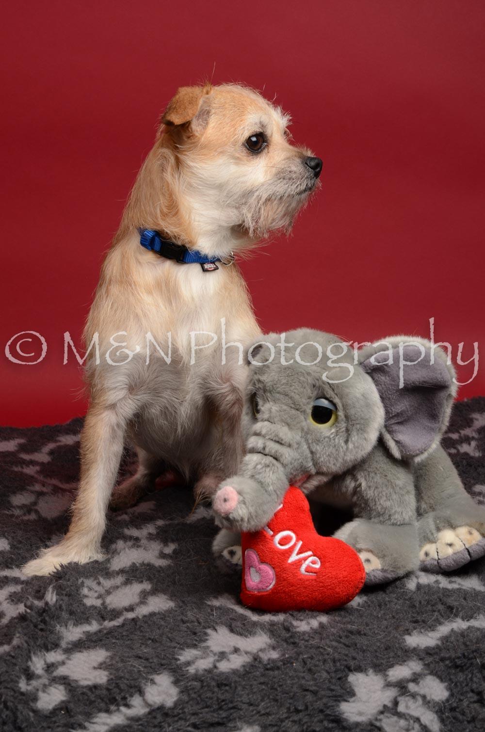 M&N Photography -DSC_8574