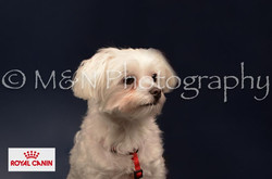 M&N Photography -DSC_4701-2