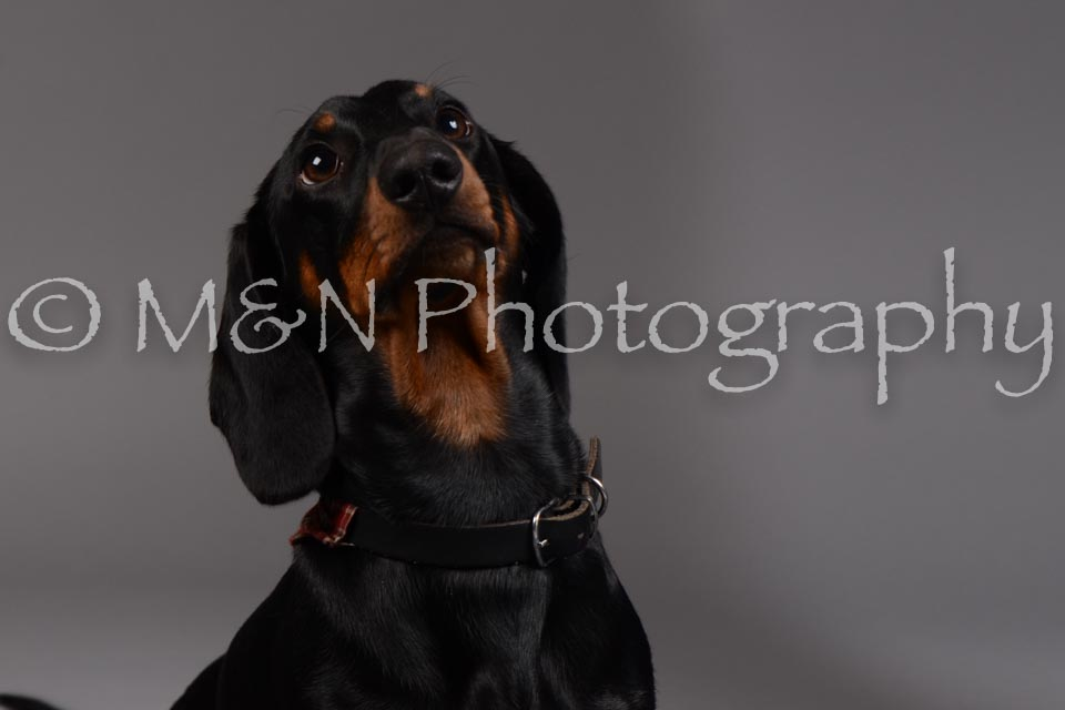 M&N Photography -DSC_1519