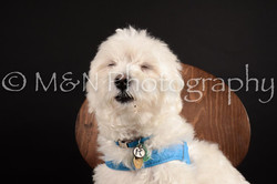 M&N Photography -DSC_9795