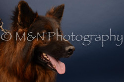 M&N Photography -DSC_4642