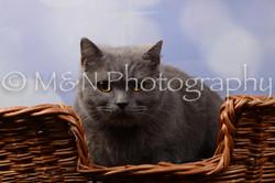 M&N Photography -DSC_6984