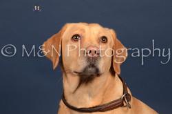 M&N Photography -DSC_4045