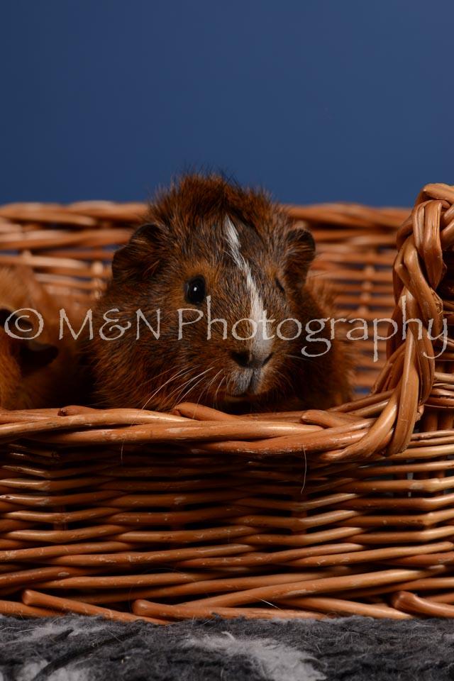 M&N Photography -DSC_5095