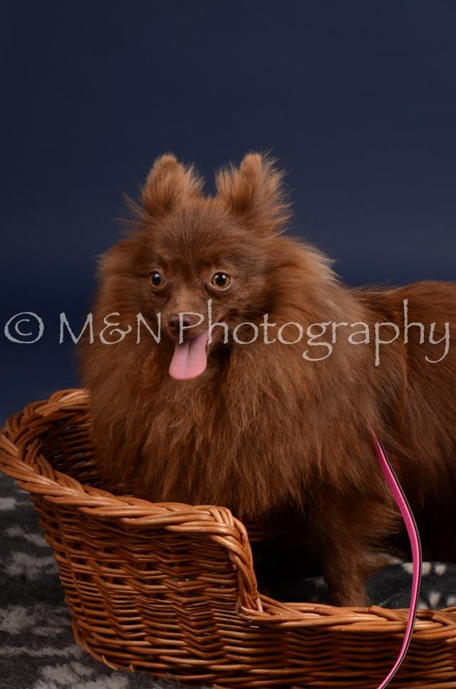 M&N Photography -DSC_0438