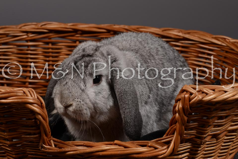M&N Photography -DSC_2279