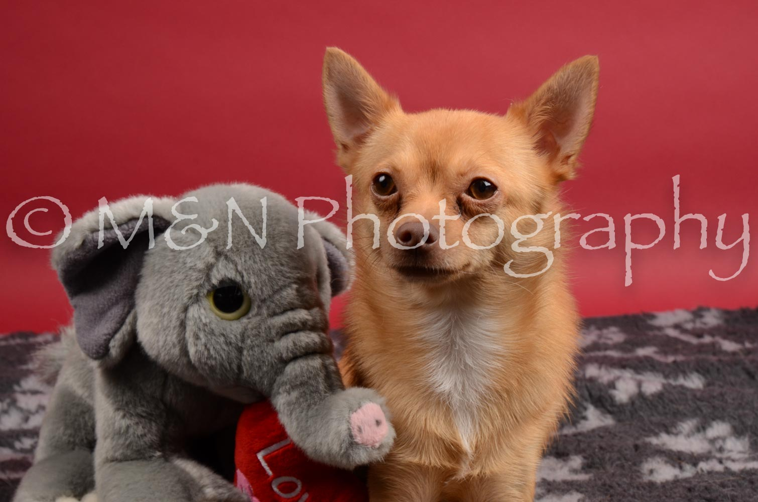 M&N Photography -DSC_8415